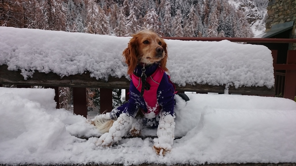 Annie before I started using olive oil for the dog snowballs