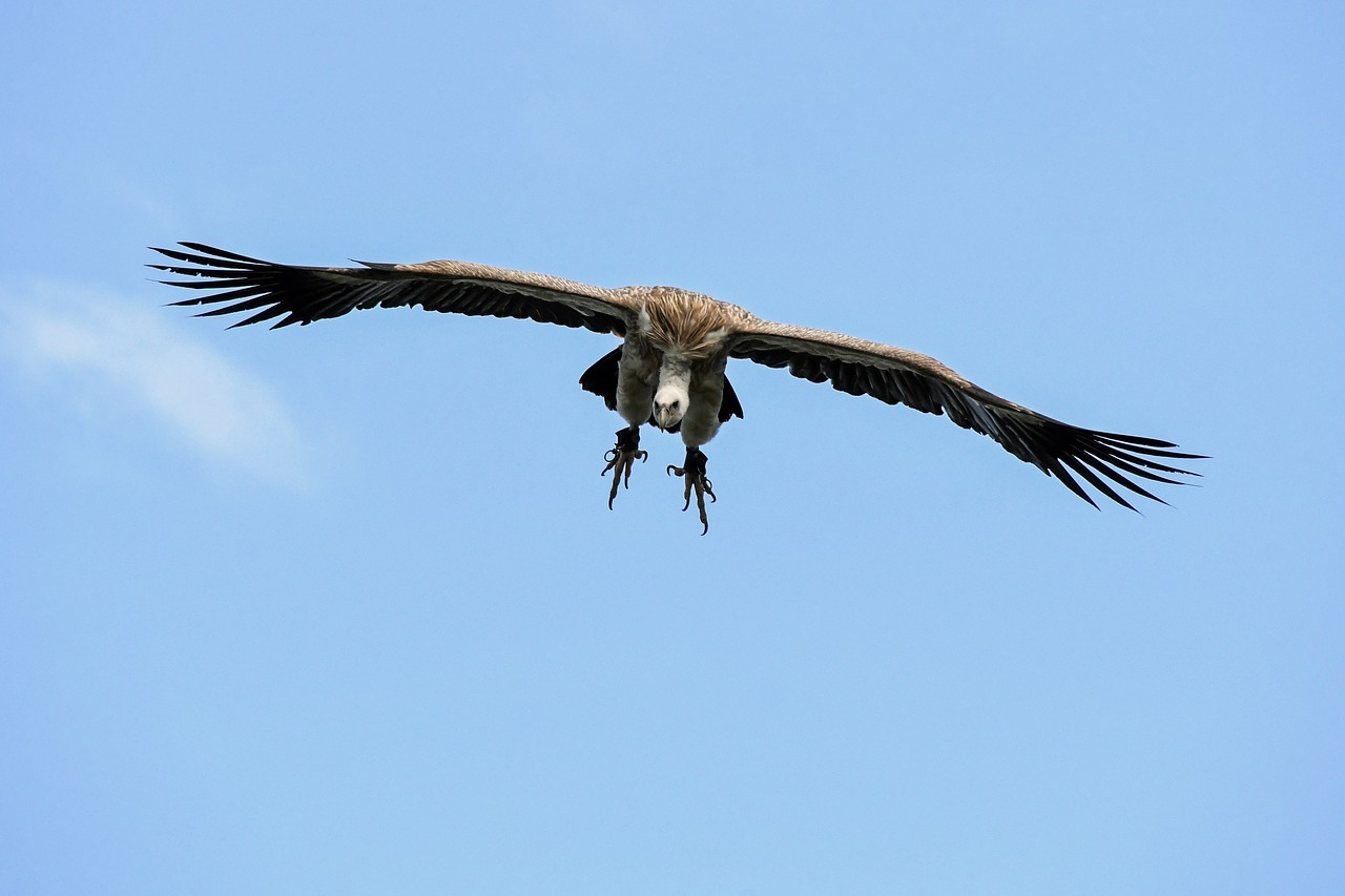 We were surprised to learn that there are Griffon Vultures in Southern Spain