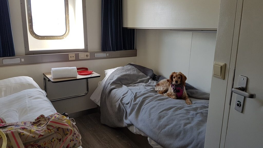Dogs traveling to Europe on DFDS Ferry